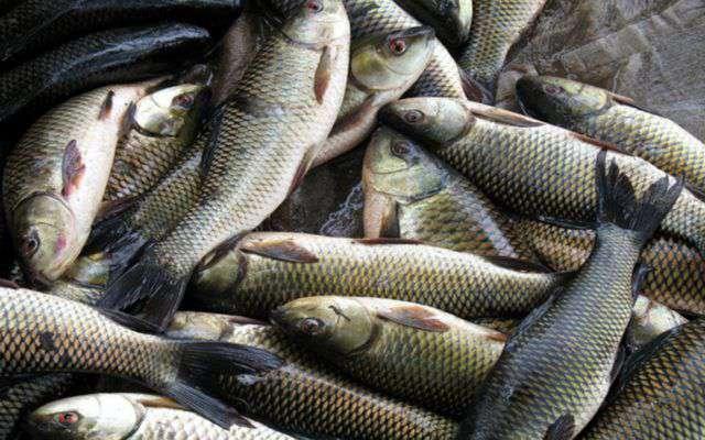 Balık üretimine 52 milyon TL destek