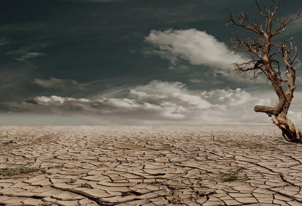 İklim Değişikliği Gıda Güvenliğini Ciddi Bir Şekilde Tehdit Ediyor...