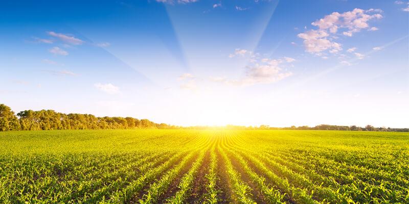 Tarım ve Kırsal Kalkınmayı Destekleme Kurumu (TKDK)'dan 164 milyon 706 bin euroluk hibe