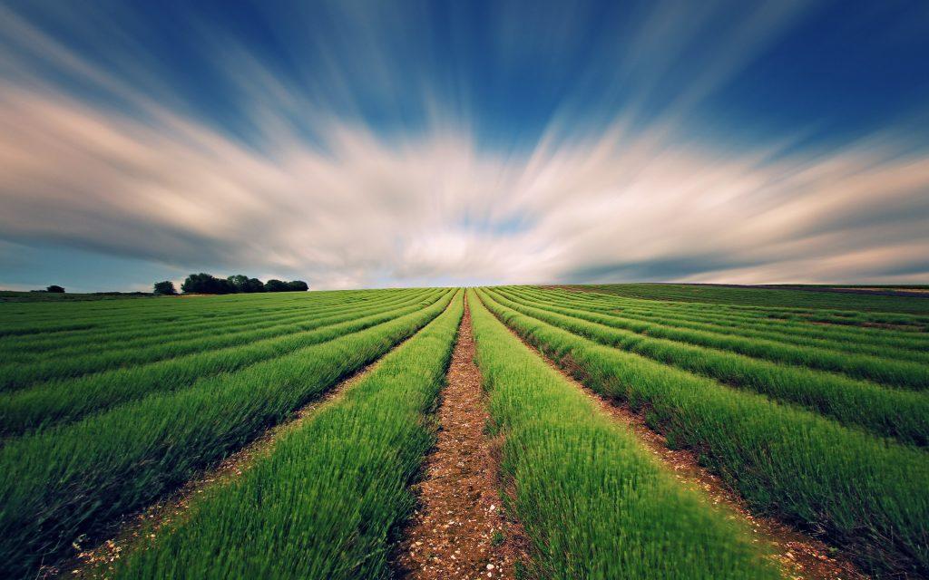 """FAO ve OECD """"2019-2028 tarım görünüm raporu"""" kamuoyuna tanıtıldı."""