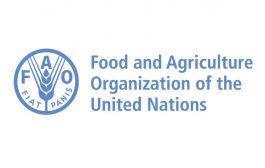 FAO,  küresel tahıl üretiminde   2 milyar 706 milyon tona ulaşacağını öngörüyor