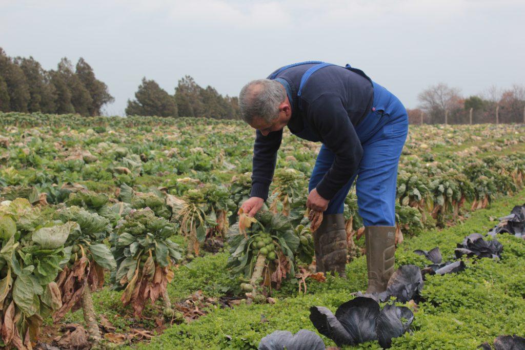 Avrupa'dan güzel haber:  Pestisitlere dayalı tarım sistemi değişecek